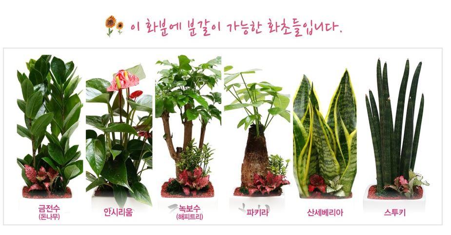 분갈이화초